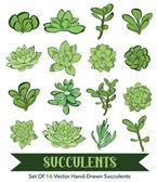 Vector Succulents Hand Drawn 16 Set Seamless Pattern — Stock Vector