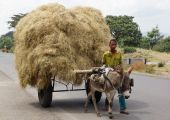Donkey barrow, Great Rift Valley, Ethiopia, Africa — Stock Photo