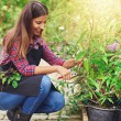 Nursery worker pruning a potted plant — Stock Photo #82159388