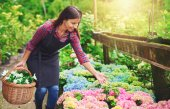 Pretty young nursery owner pointing to the flowers — Stock Photo