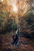Curved tree — Стоковое фото