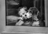 Pojke och hund — Stockfoto