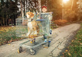 Boy walk with dog in shopping trail — Stock Photo