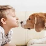 Постер, плакат: Boy give cookie for beagle