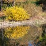 Water reflection - lake Liptovska Mara, Slovakia — Stock Photo #55868161