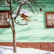 Bird house on the tree in front of chalet — Stock Photo #65535423