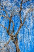 Hoarfrost on tree — Stock Photo