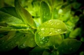 Water drop on leaves — Stock Photo