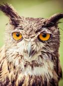 Detail of owl — Stock Photo