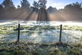 Sunrise over Grassland with lots of Dew — Stock Photo