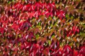 Autumn leaf Background — Stock Photo
