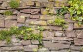 Old Cobblestone Wall Vegetation Background — Stock Photo