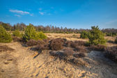 Heather and Sand in the Veluwe Area — Stock Photo