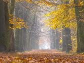 Yellow Foliage of Birch Trees during Autumn — Stock Photo