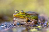 Green Frog Outside — Stock Photo