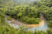 Meandering creek through Forested Hills of New Zealand — Stock Photo