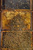 Bee colony — Stock Photo