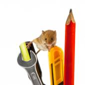 Mouse on tools — Stock Photo