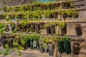 Hanging baskets vegetable garden — Stock Photo