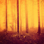 Creepy yellow red saturated forest — Stock Photo