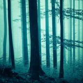 Blue color saturated foggy forest — Stock Photo