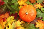 Autumn leaves with pumpkin — Stock Photo