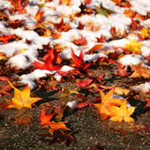Colorful leaves in the snow — Stock Photo