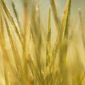 Blurred autumn frozen grass — Foto de Stock