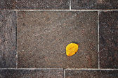 Autumn leaf on the floor — Stock Photo