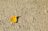 Single autumn leaf on the floor — Stock Photo