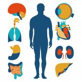 Flat design icons for medical theme. Human anatomy, huge collection of human organs — Stock Vector