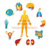 Medical background. Human anatomy. — Stock Vector