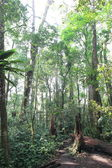Mt.Kerinci tropical forest, Sumatra Island, Indonesia — Stok fotoğraf