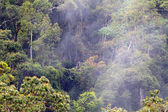 Papua New Guinea misty rainforest, tari gap — Stock Photo