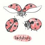 Hand drawn Ladybugs — Stock Vector #52770255