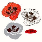Set of poppy flowers — Stock Vector