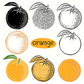 Hand drawn illustration of oranges — Stock Vector
