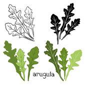Arugula Hand drawn Set — Stock Vector
