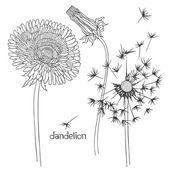 Uppsättning av maskros blommor — Stockvektor