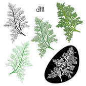 Set of green dill sprigs — Stock Vector