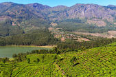 View of tea plantation valley and Madupetty Dam in Munnar — Stock Photo