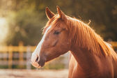 Horse in the paddock, Outdoors, rider — Stock Photo