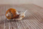 Mollusks, grass, slime, the grape snail, Bright shell, creeps — Stock Photo
