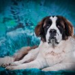 Saint Bernard dog on a color background — Stock Photo #54638893