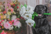 Drawing dog breed black Labrador, portrait — Stock Photo