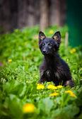 Black dog on the nature — Stock Photo