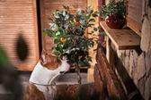 Amerikanen staffordshire förfärlig hund — Stockfoto