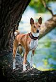 Alçaklık köpek doğurmak — Stok fotoğraf
