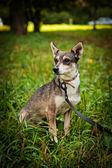 Portrait small mixed breed dog — Stockfoto
