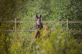 Horse, horses neck, the horse in the summer, horse chestnut suit — Stock Photo